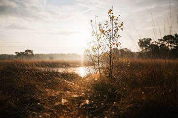 Mooie zonsopkomst van Bjorn Dockx