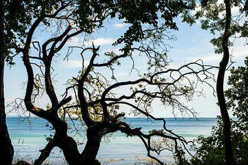 uitzicht op zee gezien door een oude grillige boomstronk von Hanneke Luit