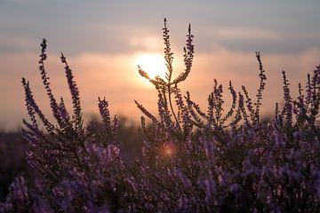 Hoorneboegse Heide - 6 van Nuance Beeld