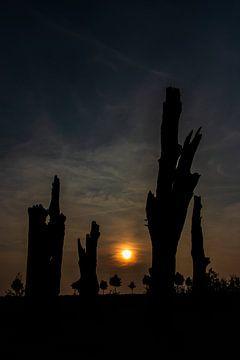 Dead Trees at Night von Clive Lynes