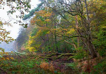 Herfst langs de bosrand von Evert Jan Kip