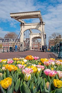 Bloeiende tulpen bij de Magere Brug in Amsterdam van Nisangha Masselink