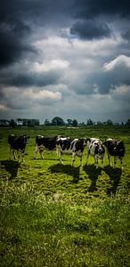 Koeien van