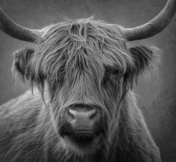 Schottischer Highlander, Porträt in Schwarz und Weiß von Marjolein van Middelkoop
