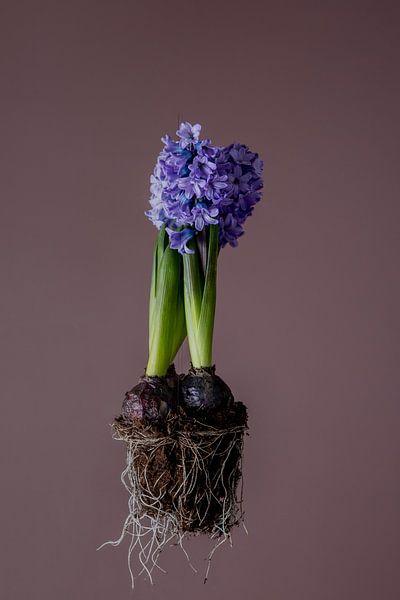 Hyacint van Matty Maas