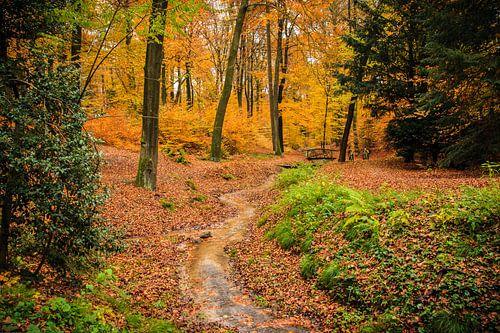 Herfstkleuren in Nederland
