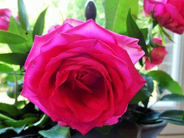 roze roos von Marleen De Wandeleer