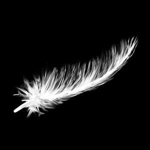 Schwarze Leinwand - weiße Daunenfedern