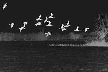 Wulpen boven het weiland (negatief) von Fotografie Jeronimo
