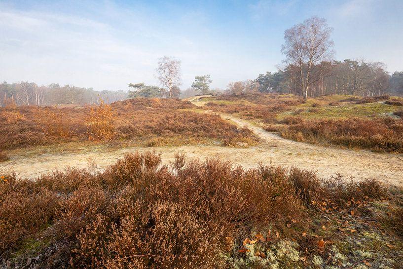Zoomland, Bergen op Zoom van Teuni's Dreams of Reality