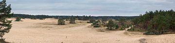 Panorama SandverwehungHulshorst von Jenco van Zalk