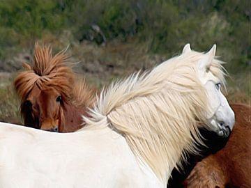 Island-Ponys von Maurice Dawson
