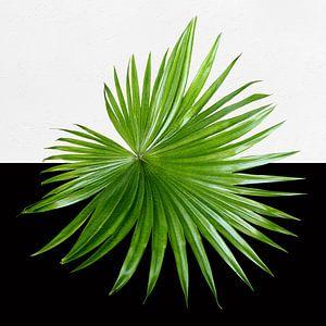 groen op zwart en wit van Andreas Wemmje