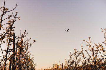 Spring is in the air van Marianne Bal