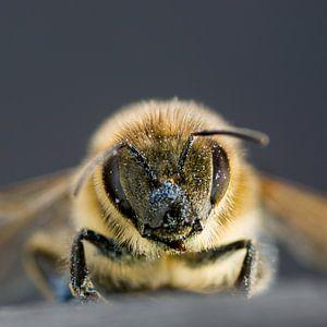 Honingbij van Marlies Wolfert