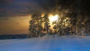 Avondsfeer in Pasvik Nationaal Park van Kai Müller