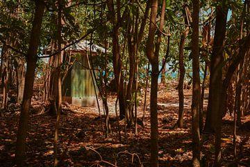 Huisje in het bos van Daphne Elderenbos