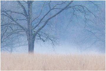 Vroege winterochtend van Hetwie van der Putten