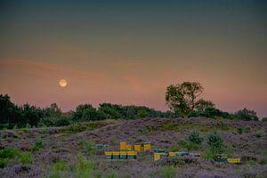 Maansopkomst over de heide