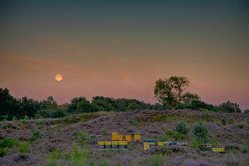 Moonrise über den Mooren von joas wilzing