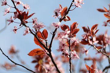 In Blüte von Marije Zwart