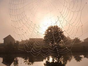Spinneweb met zon