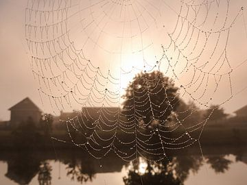 Spinneweb met zon von Anneriek de Jong