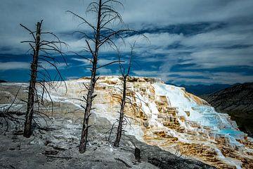 Mammoth Upper Terraces, Yellowstone National Park van Harold van den Hurk