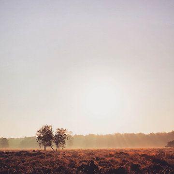 Heide in der Nähe von Slabroek von Lavieren Photography