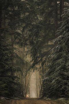 Weg durch dunkle Kiefernwälder im Speulderbos-Wald im Winter von Sjoerd van der Wal