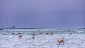 Winterlandschap op Texel van