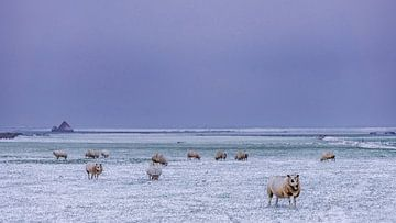 Winterlandschap op Texel sur