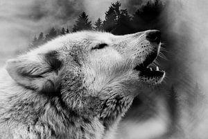 Wolf & Wald 2 von Mateo