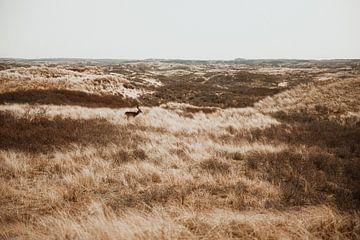 Hirsche im Hintergrund der Dünen von Yana Spiridonova