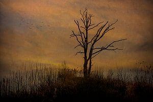 Dode boom tegen bewolkte achtergrond.... van Wim Schuurmans