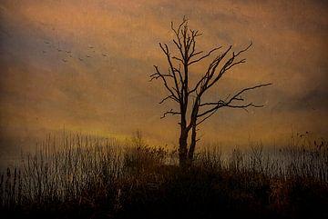Dode boom tegen bewolkte achtergrond....