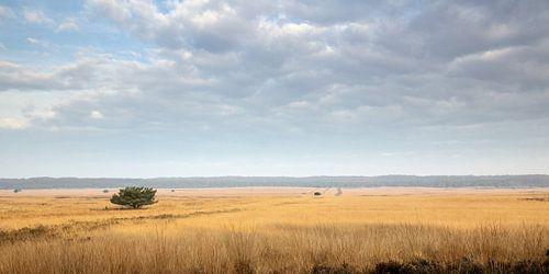 Landscape of Dutch Veluwe von Remco Bosshard