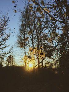 Abendsonne van