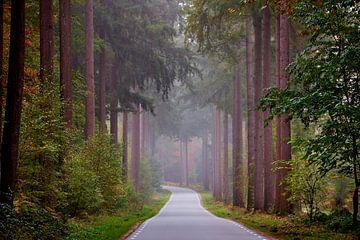 Weg door de monumentale Veluwse bossen van Jenco van Zalk