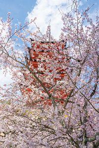 Kersenbloesem en pagode in Miyajima.