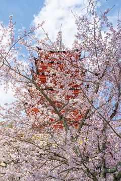 Kersenbloesem en pagode in Miyajima. van Mickéle Godderis