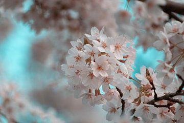 Kirschblüte mit blauem Himmel von Joey D.