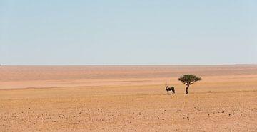 Namibië, eenzame  spiesbok van Jeannette Kliebisch