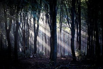Die Lichtstrahlen werden durch die Bäume wunderschön geformt von Studio de Waay