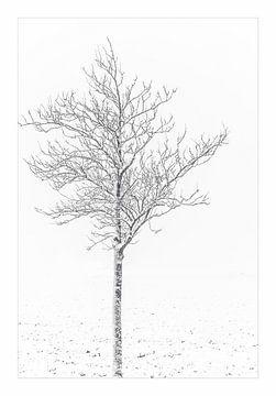 Boom in de sneeuw von Willy Sybesma