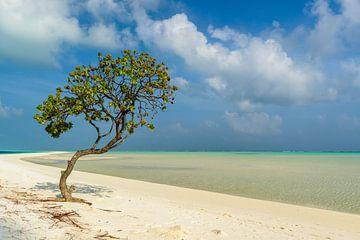 Am einsamen Strand von Denis Feiner