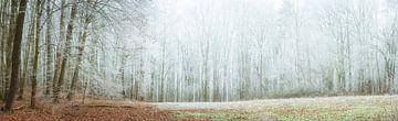 Frost im Wald (Panorama) von Tobias Luxberg