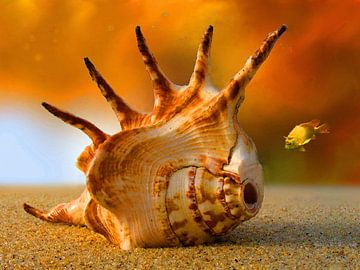Onderwaterwereld   04 van Dirk H. Wendt