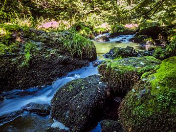 Beek in een bos in het Vogtland van Animaflora PicsStock