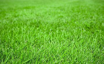 Groen gras van BVpix